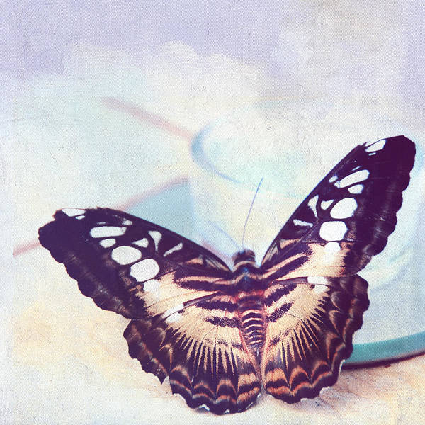 Photograph - Tender Morning With Butterfly  by Jenny Rainbow
