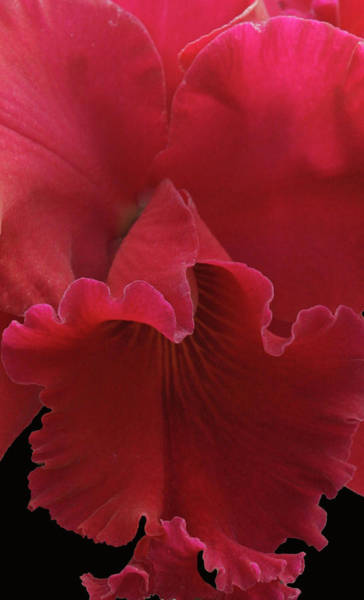 Photograph - Tender Orchid by Anthony Jones