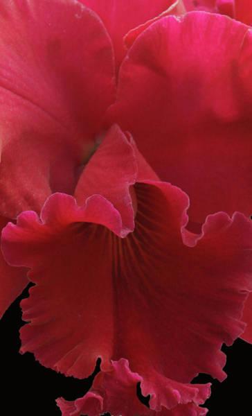 Tender Orchid Art Print