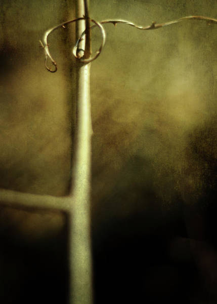 Photograph - Tendril by Rebecca Sherman