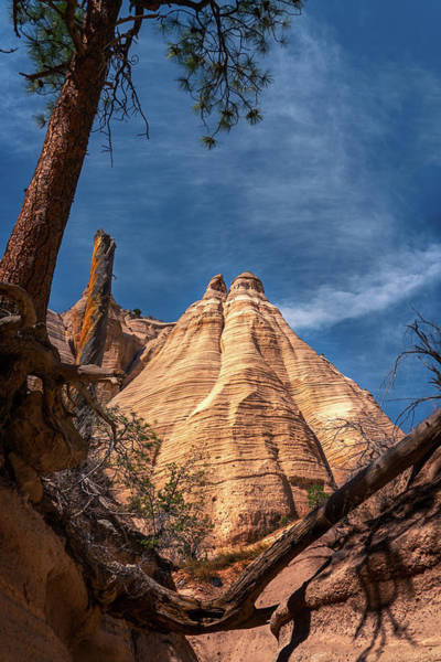 Photograph - Tent Rock And Ponderosa Pine by Robert FERD Frank