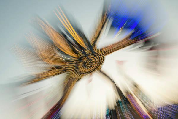 Photograph - Tentacular by Alex Lapidus