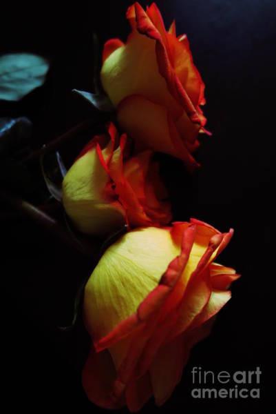 Tequila Sunrise Photograph - Tequila Sunrise Roses 2 by Tara Shalton