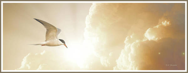Tern In Flight, Spiritual Light Of Dusk Art Print