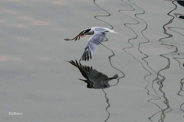 Wall Art - Photograph - Tern Style One by Bill Roberts