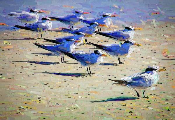 Photograph - Terns On The Beach by Alice Gipson