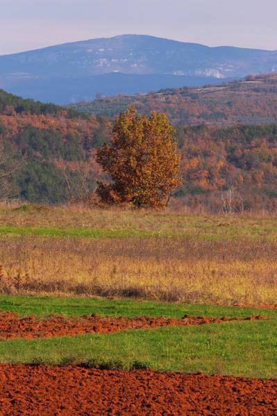 Photograph - Terra Istria by Davor Zerjav