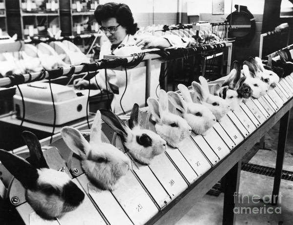 Photograph - Tests On Animals, 1957 by Granger