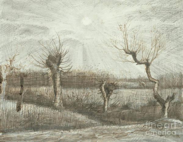 Twilight Drawing - Tetards  Pollards by Vincent Van Gogh