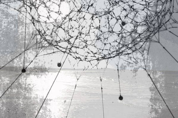 Photograph - Tethered by Susan Vineyard