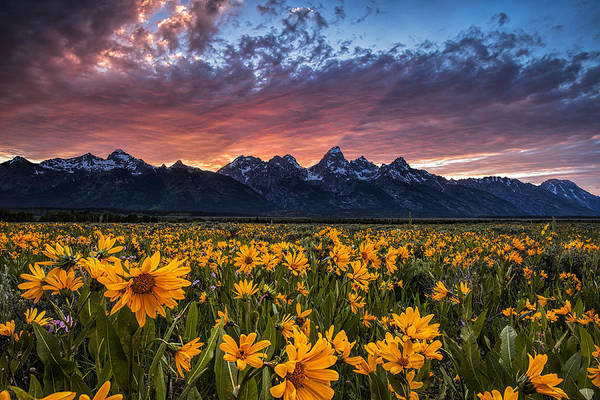 Wall Art - Photograph - Tetons And Wildflowers At Sunset by Andrew Soundarajan