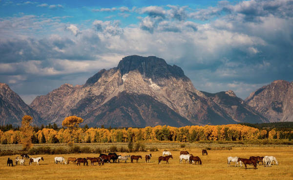 Photograph - Teton Horse Ranch by Darren White