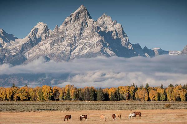 Teton Horses Art Print