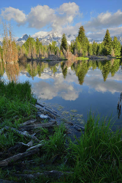 Photograph - Teton Reflection In Schwabacher Landing by Ray Mathis