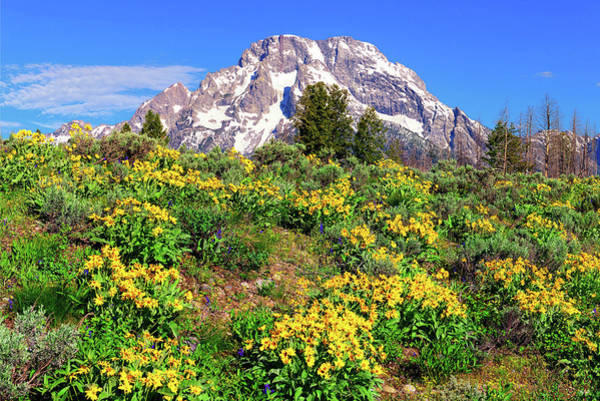 Photograph - Teton Spring In The Valley by Greg Norrell