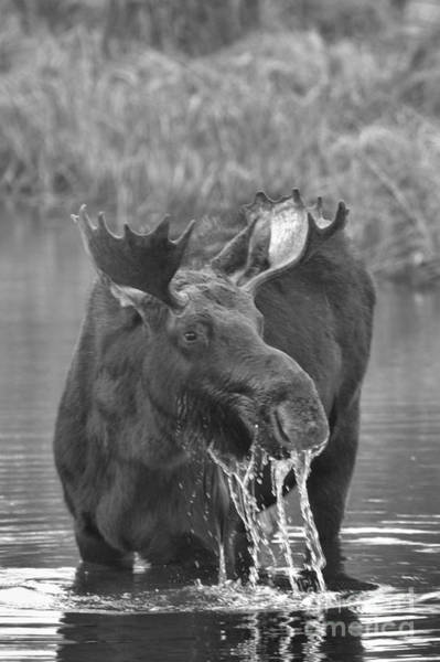 Drool Photograph - Teton Watery Lunch - Black And White by Adam Jewell