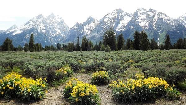 Teton National Park Digital Art - Teton Wildflower Sky by Barkley Simpson