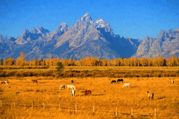 Photograph - Tetons And Horses by Greg Norrell