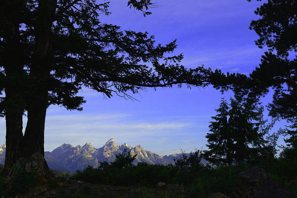 Photograph - Tetons From The Wedding Trees by Craig Ratcliffe