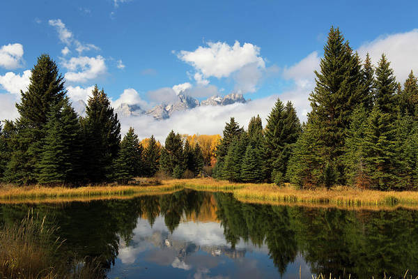 Photograph - Tetons In A Beaver Pond by Mike Fitzgerald