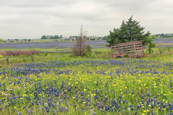 Photograph - Texas Bluebonnets 3 by Victor Culpepper