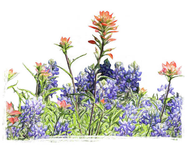 Wall Art - Photograph - Texas Bluebonnets And Red Indian Paintbrushes by David and Carol Kelly