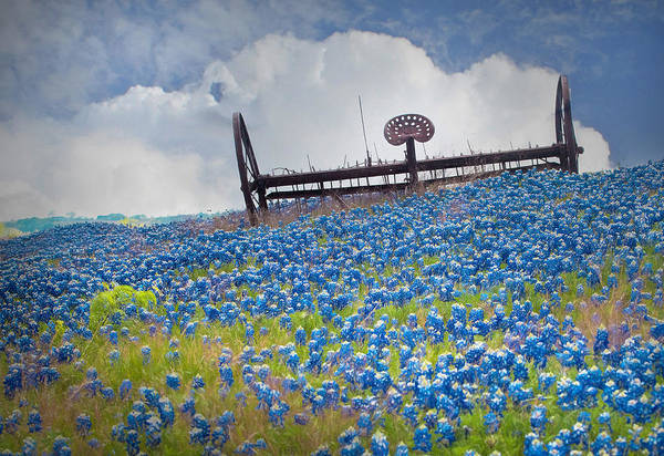 Texas Bluebonnet Photograph - Texas Bluebonnets And Plow by David and Carol Kelly