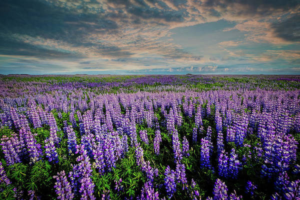 Wall Art - Photograph - Texas Bluebonnets by Ricky Barnard