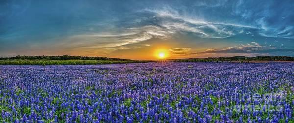 Stye Photograph - Texas Bluebonnets Sunset Pano by Bee Creek Photography - Tod and Cynthia