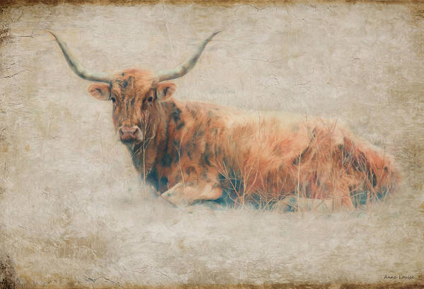 Photograph - Texas Long Horn Portrait by Anna Louise