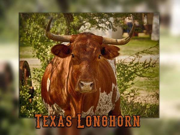 Photograph - Texas Longhorn by Charles McKelroy
