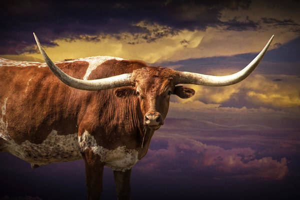 Photograph - Texas Longhorn Steer At Sunset by Randall Nyhof