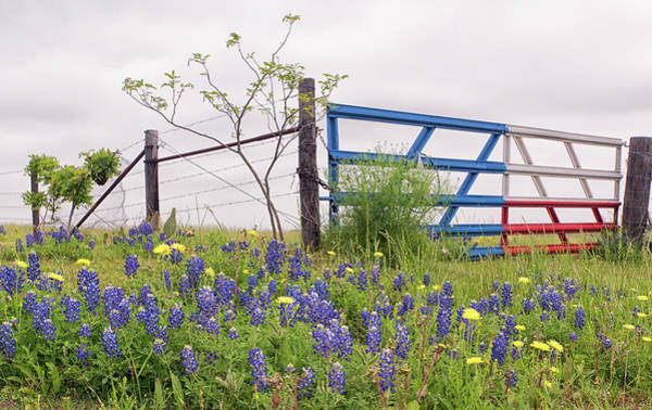 Photograph - Texas Ranch Gate by Victor Culpepper