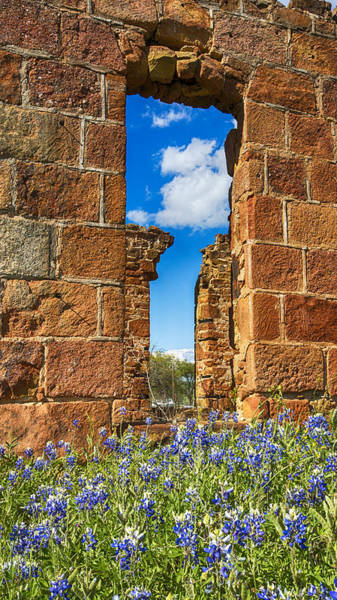 Wall Art - Photograph - Texas Red, White And Bluebonnets by Stephen Stookey