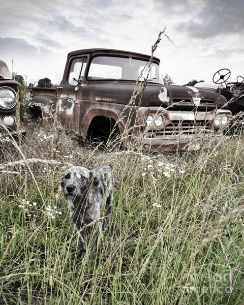 Wall Art - Photograph - Texas Roadside Dog by Chris Andruskiewicz