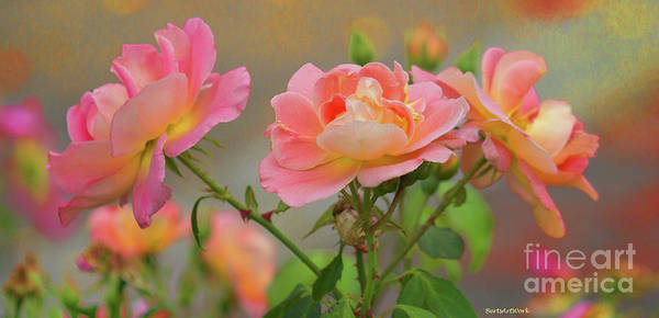Photograph - Texas Rose 3 by Roberta Byram