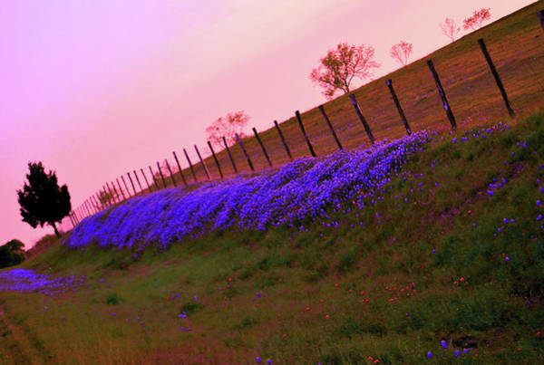 Texas Bluebonnet Digital Art - Texas Sherbet Country by Pamela Smale Williams