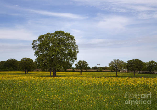 Wall Art - Photograph - Texas Spring by Elena Nosyreva