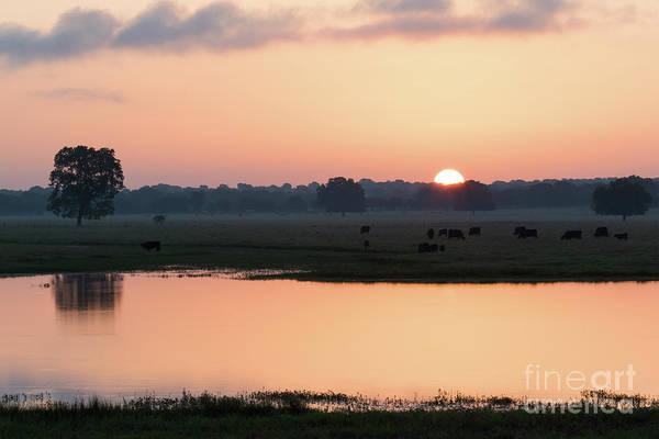 Photograph - Texas Sunrise by Vincent Bonafede