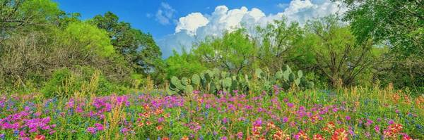 Wall Art - Photograph - Texas Widflowers 2 by Craig H Sladek