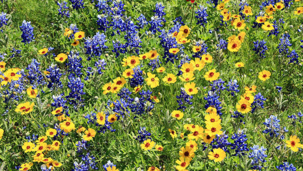 Wall Art - Photograph - Texas Wildflower Mix by Stephen Stookey
