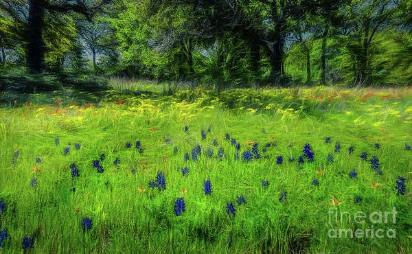 Texas Bluebonnet Digital Art - Texas Wildflowers by Elijah Knight