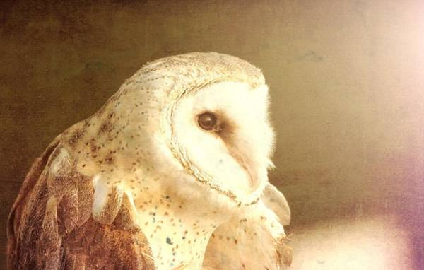 Photograph - Textured Barn Owl by Dan Sproul