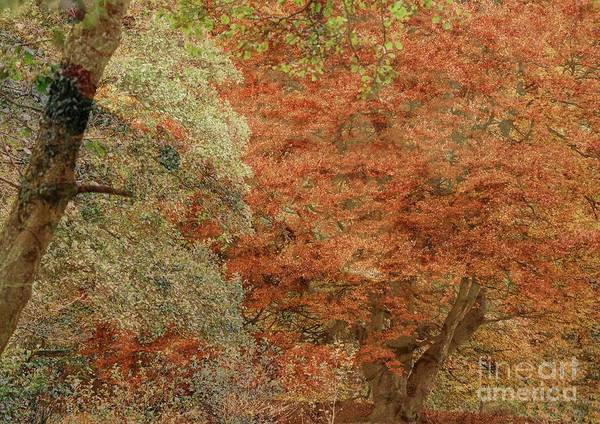Photograph - Textured Fall Trees by Martyn Arnold