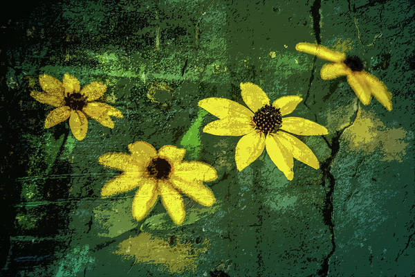 Photograph - Textured Flower 3 by Michael Arend