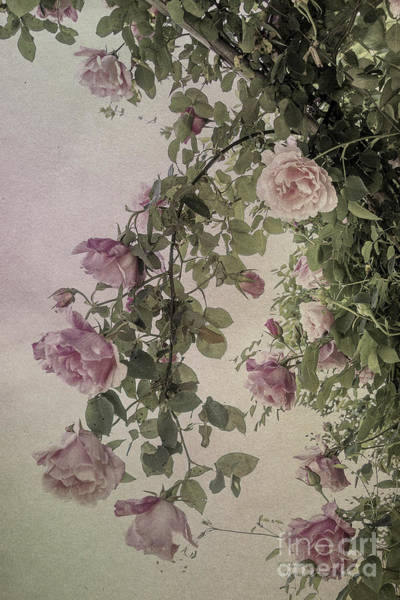 Photograph - Textured Roses by Elaine Teague
