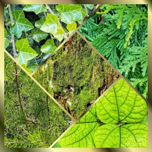 Photograph - Textures In Shades Of Green by Rachel Hannah
