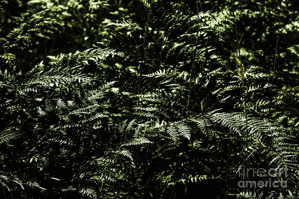 Dark Green Wall Art - Photograph - Textures Of A Rainforest by Jorgo Photography - Wall Art Gallery