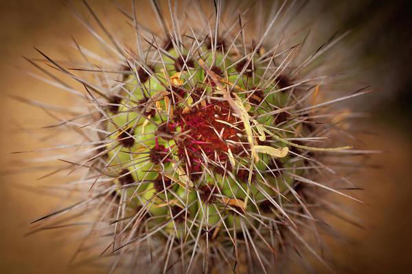 Photograph - Textures Of Arizona by John Magyar Photography