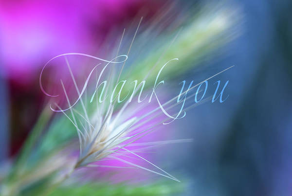 Wall Art - Digital Art - Thank You 5 by Terry Davis